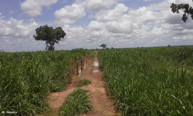 Fazenda para Venda em Gurupi, Área Rural de Gurupi, 3 dormitórios, 2 banheiros, 5 vagas - Foto 15