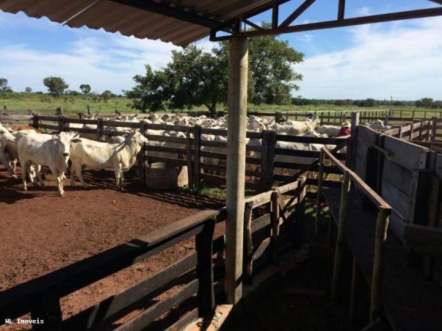 Fazenda para Venda em Gurupi, Área Rural de Gurupi, 3 dormitórios, 2 banheiros, 5 vagas - Foto 7