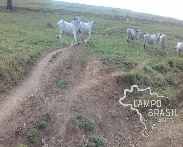 Fazenda de 98 alqueires no Sul de Minas! - Foto 17