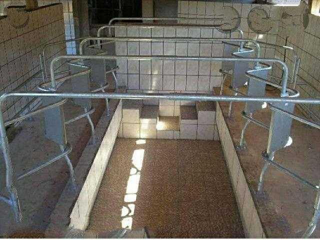 Ordenhadeira e fábrica de ração  - Foto 6