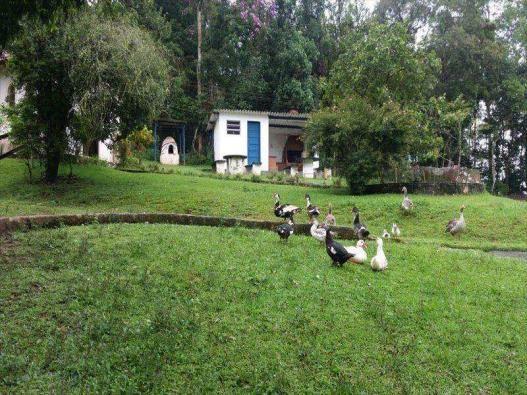 Sítio para alugar em Centro de ouro fino paulista, Ribeirão pires cod:9898 - Foto 3