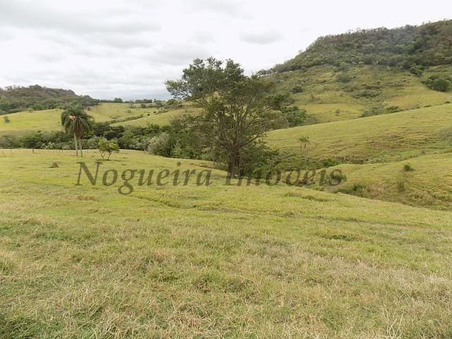 Fazenda de 65 alqueires na região (Nogueira Imóveis Rurais) - Foto 3