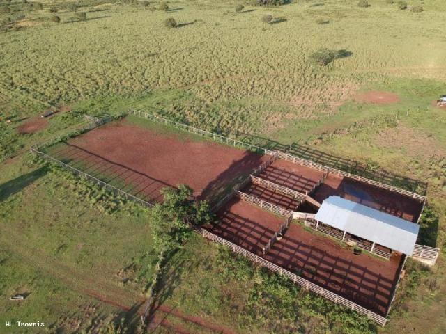 Fazenda para Venda em Gurupi, Área Rural de Gurupi, 3 dormitórios, 2 banheiros, 5 vagas - Foto 3
