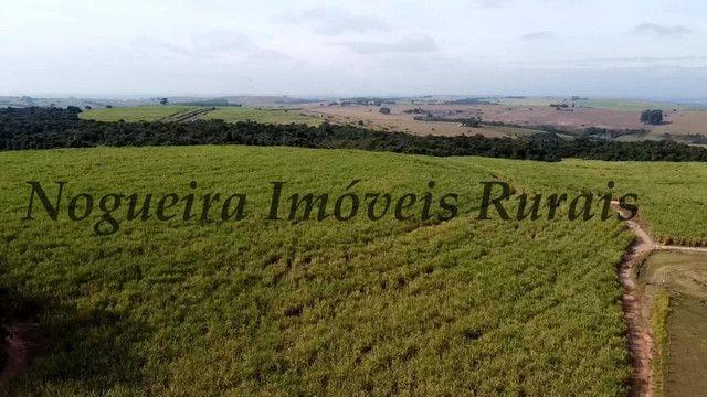Fazenda com 69 alqueires na região (Nogueira Imóveis Rurais) - Foto 7