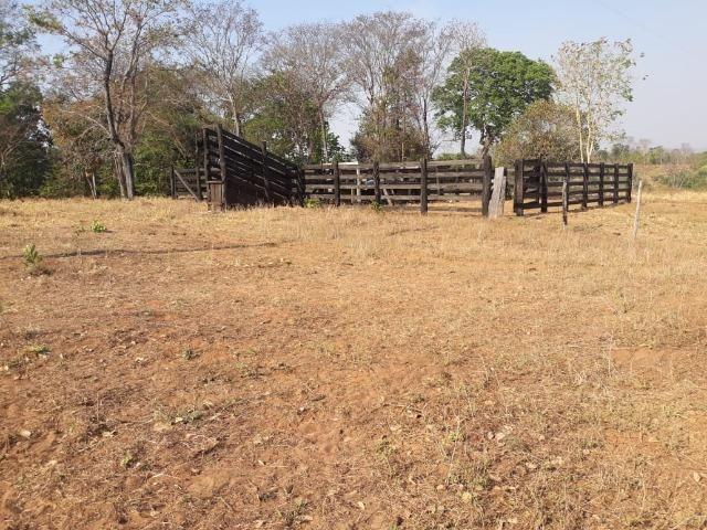 Chácara de 54 hectares, chapada,sendo 33 formado - Foto 15