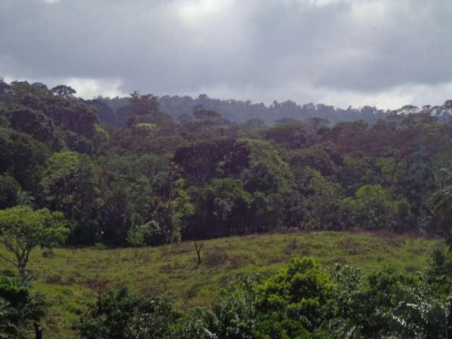 Fazenda de cacau no sul da bahia. mascote - camacã - itabuna - Foto 3