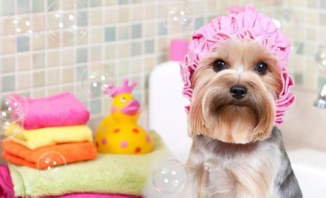 MRS Negócios - Vende Pet Shop + Consultório Vet - Poa/RS