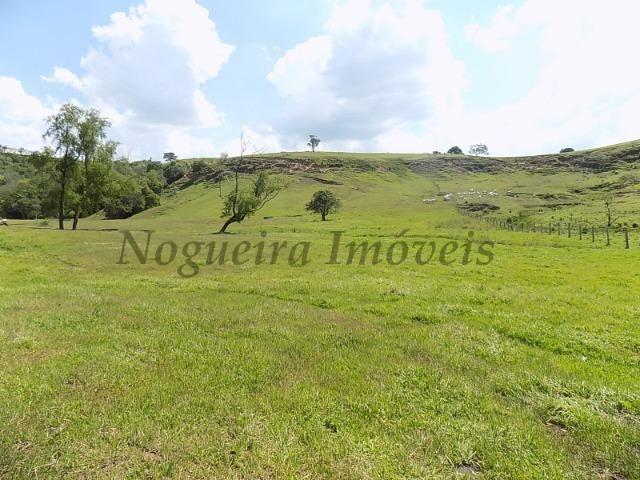 Fazenda de 65 alqueires na região (Nogueira Imóveis Rurais) - Foto 20