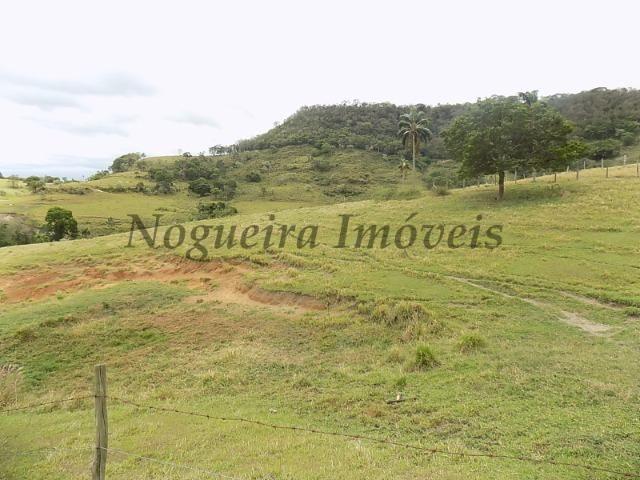 Fazenda de 65 alqueires na região (Nogueira Imóveis Rurais) - Foto 17