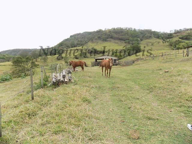 Fazenda de 65 alqueires na região (Nogueira Imóveis Rurais) - Foto 5