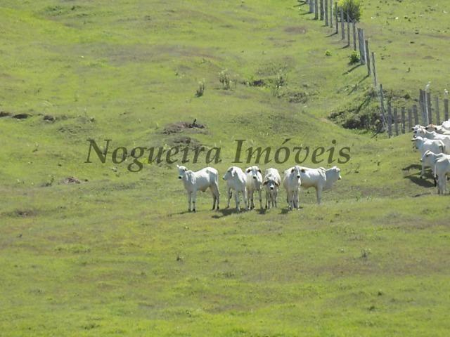 Fazenda de 65 alqueires na região (Nogueira Imóveis Rurais) - Foto 12