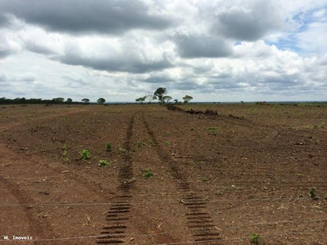 Fazenda para Venda em Gurupi, Área Rural de Gurupi, 3 dormitórios, 2 banheiros, 5 vagas - Foto 17
