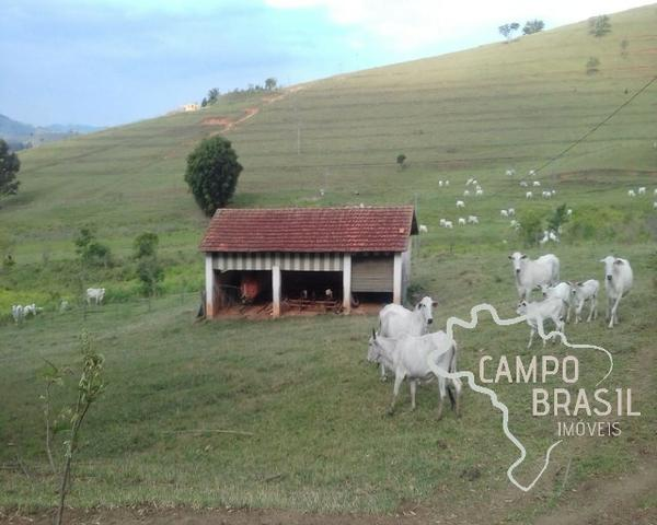 Fazenda de 98 alqueires no Sul de Minas! - Foto 5