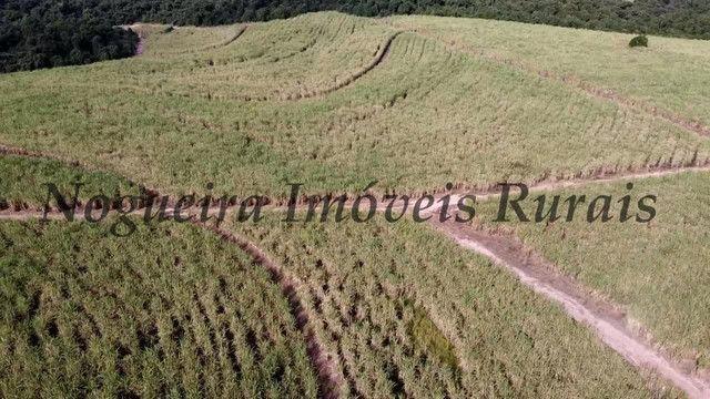 Fazenda com 69 alqueires na região (Nogueira Imóveis Rurais) - Foto 10