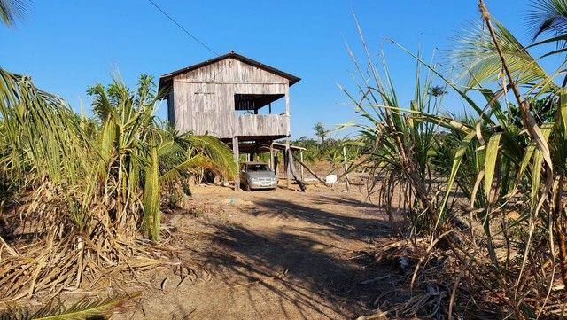 Vendo Sítio de 35 Hectares no KM 100, Ramal São Bernardo. BR 319.   - Foto 16