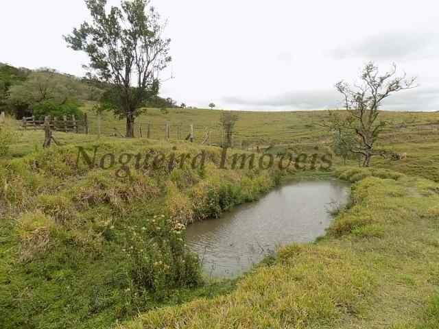 Fazenda de 65 alqueires na região (Nogueira Imóveis Rurais) - Foto 8