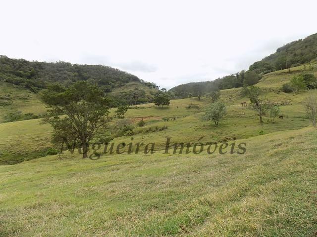 Fazenda de 65 alqueires na região (Nogueira Imóveis Rurais) - Foto 13