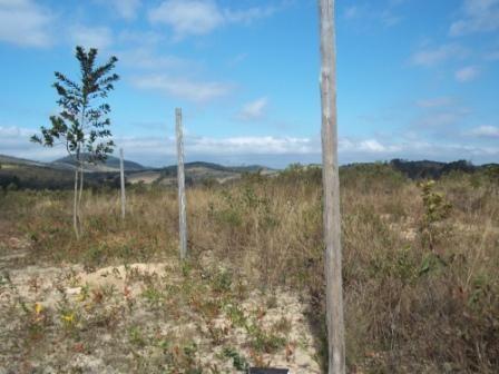 Terreno à venda em Maracujá, Ouro preto cod:4267 - Foto 3