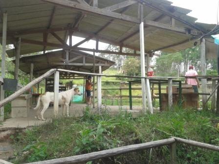 Sítio à venda com 3 dormitórios em Moinhos, Conselheiro lafaiete cod:8388 - Foto 16