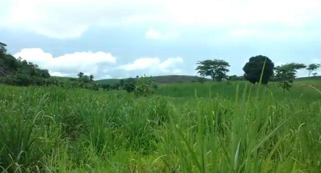Propriedade de 140 hectares, entre Vitória e Escada-PE. - Foto 12