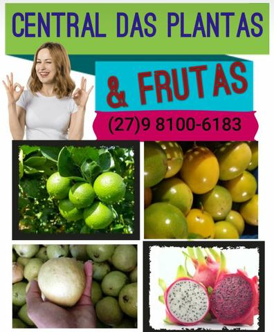 Frutas atacado e varejo