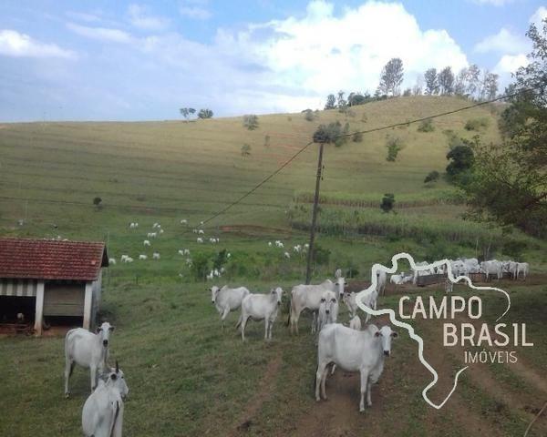 Fazenda de 98 alqueires no Sul de Minas!