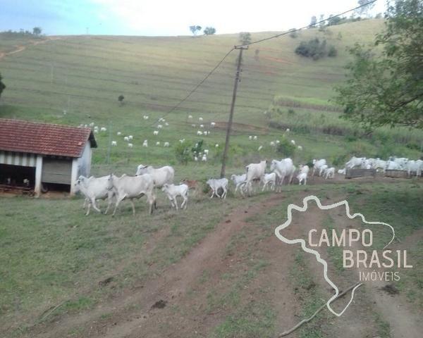 Fazenda de 98 alqueires no Sul de Minas! - Foto 4