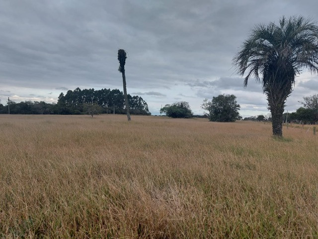 Sitio 8 hectares, 2 casas e pomar, ótimas pastagens, Velleda oferece - Foto 3