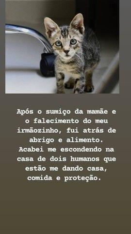 adoção de Gatinho - Foto 2