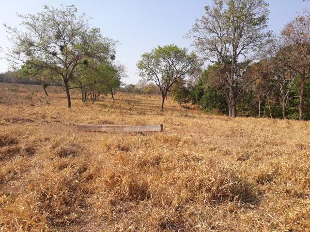 Chácara de 54 hectares, chapada,sendo 33 formado - Foto 8