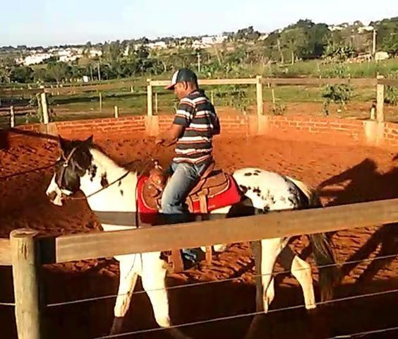 Paint Horse Homozigoto PO - Foto 2