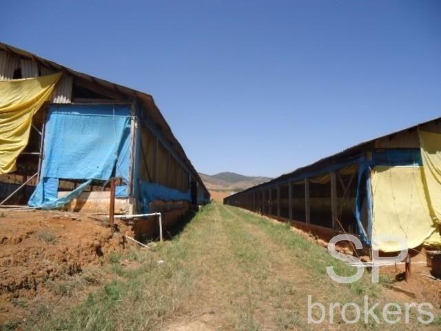 Chácara à venda com 1 dormitórios em Serra de cima, Serra negra cod:FA002536 - Foto 9