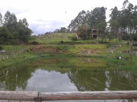 Sítio à venda com 3 dormitórios em Moinhos, Conselheiro lafaiete cod:8388 - Foto 2
