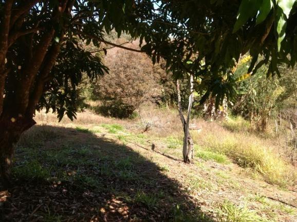 Sítio à venda com 2 dormitórios em Morro da mata, Cachoeira do campo cod:5931 - Foto 2