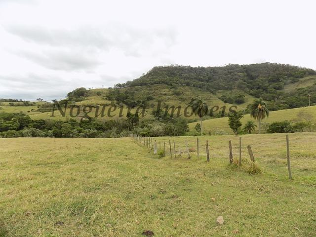 Fazenda de 65 alqueires na região (Nogueira Imóveis Rurais) - Foto 7