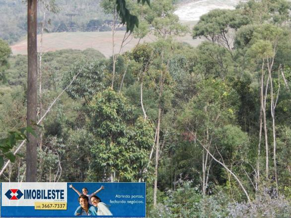 Terreno à venda em Lustosa arroio grande, Ipiranga cod:10330.1860 - Foto 7