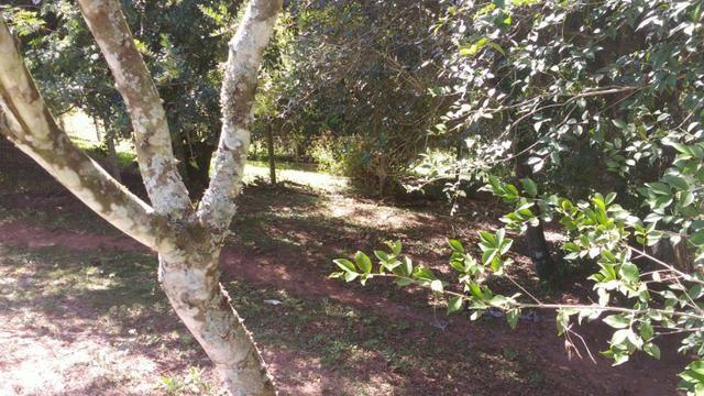 Lindo Sítio de 01 ha em Lomba Grande - Foto 6