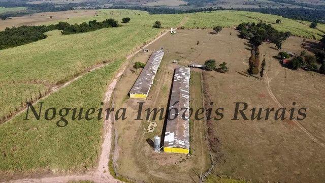 Fazenda com 69 alqueires na região (Nogueira Imóveis Rurais) - Foto 6