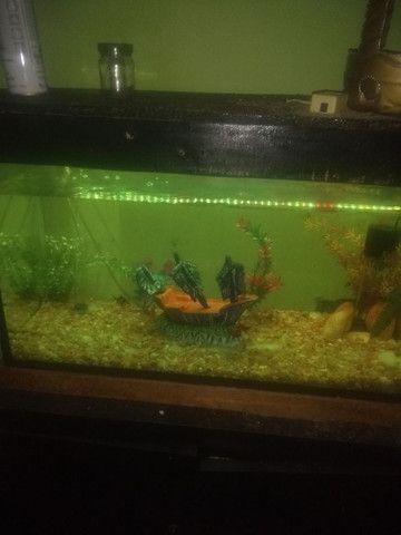 aquário de água doce - Foto 2