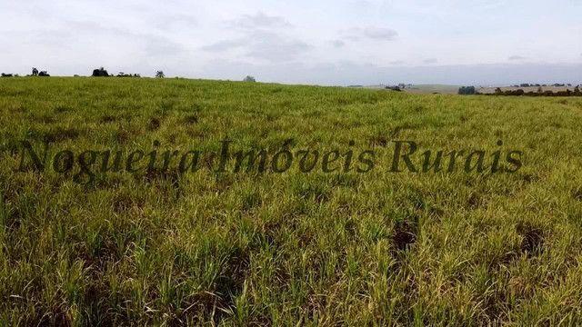 Fazenda com 69 alqueires na região (Nogueira Imóveis Rurais) - Foto 16