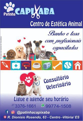 Pet Shop E Banho Tosa - Foto 4