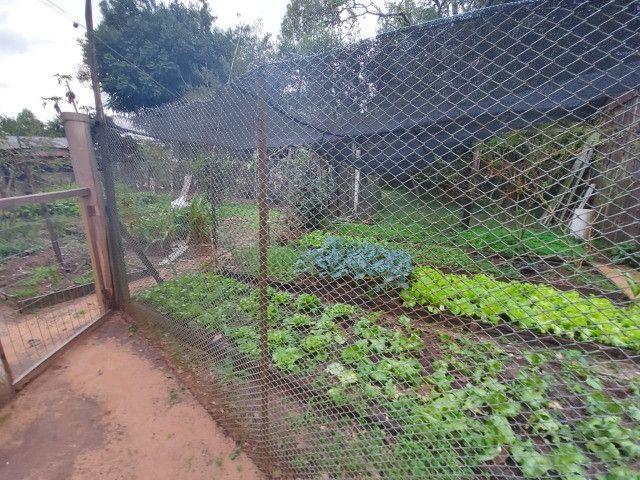 Sitio 8 hectares, 2 casas e pomar, ótimas pastagens, Velleda oferece - Foto 16