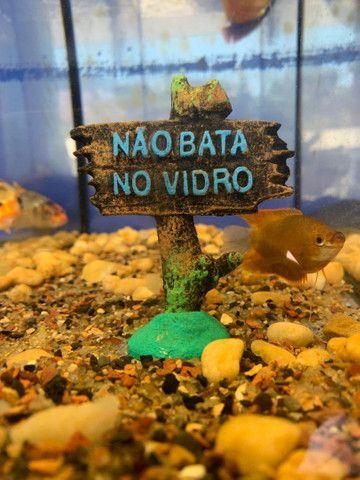 Tudo para seu aquário  - Foto 2