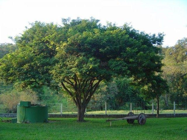 Pará De Minas - Fazenda - Santos Dumont - Foto 14