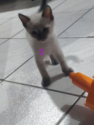 Doa-se gatinhas filhotes - Foto 3