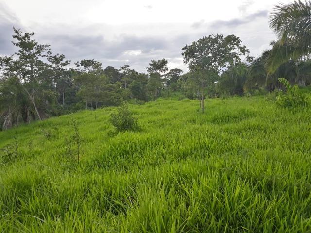 Chácara de 54 hectares, chapada,sendo 33 formado - Foto 3