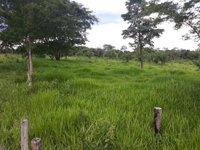 Chácara de 54 hectares, chapada,sendo 33 formado - Foto 4