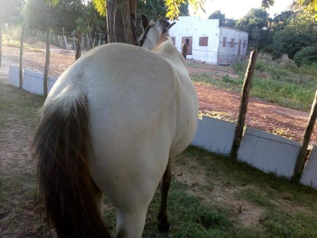 Vende-se cavalo mestiço de quarto de milha