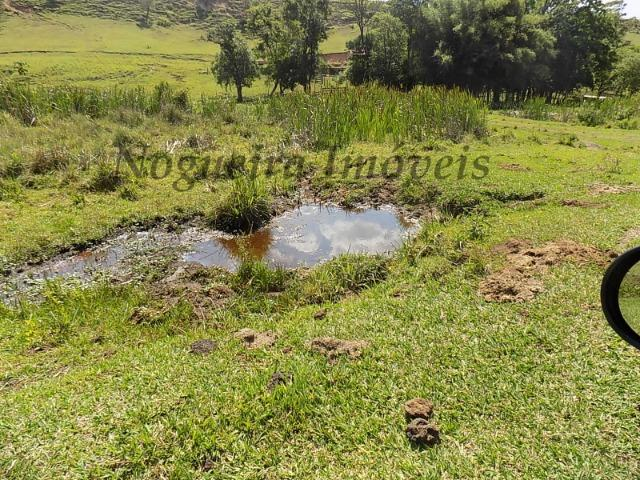 Fazenda de 65 alqueires na região (Nogueira Imóveis Rurais) - Foto 15