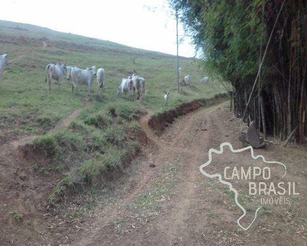 Fazenda de 98 alqueires no Sul de Minas! - Foto 6